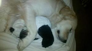 Harry sleeping with his panda bear