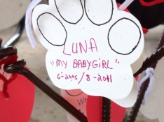 LUNA'S PAW PRINT IN HER MEMORY ON THE MEMORY TREE