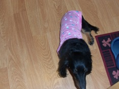 scarly thundershirt 3