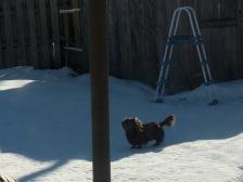 toby in snow