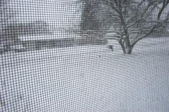 snow storm 010
