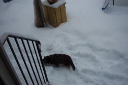 snow storm 005