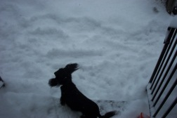 snow storm 006