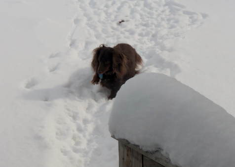 toby coming in after playing in snow