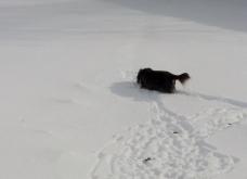 toby drudging through snowe