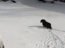 toby leaving tracks in snow