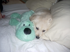 baby harry and toy