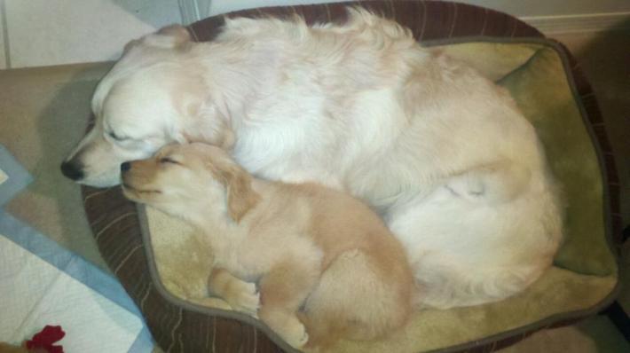 harry and billie cuddling